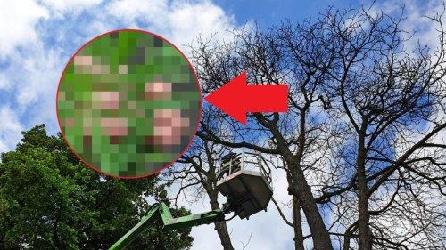 Thüringen: Verrückter Fund – skurril, was oben im Bäumen hängt