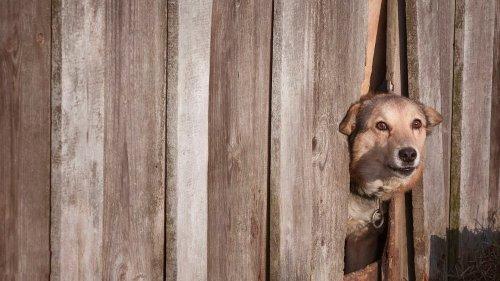 Paketzusteller im Unstrut-Hainich-Kreis von Hund gebissen