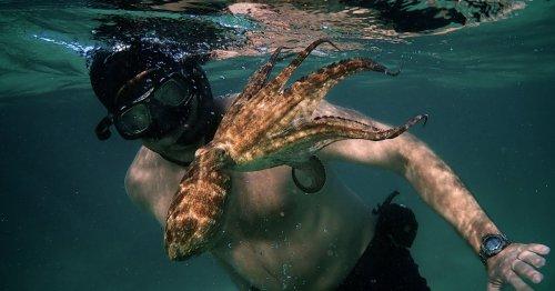 My Octopus Teacher Became a Viral Sensation on Netflix. Its Human Star Craig Foster Wants the Film to Inspire Change