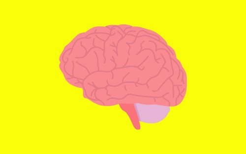 7 Ways to Keep Your Brain Sharp As You Age