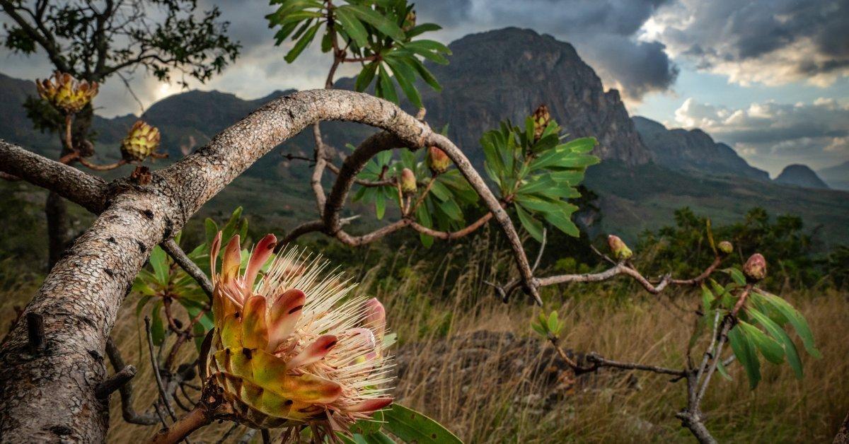 Chimanimani National Park, Mozambique