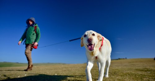 The Real Reason Why You Love Walking Your Dog