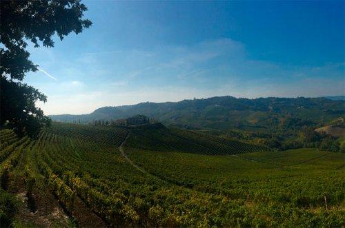 Wine Trails: Eight Piedmont wineries to visit - Decanter