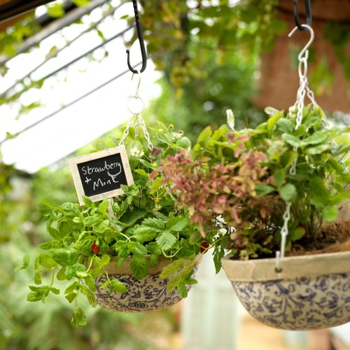 Jobs to do in the garden in May – prepping veg plots, planting hanging baskets and nurturing lawns