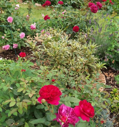 Cottage garden ideas – create a charming country-style garden in any setting