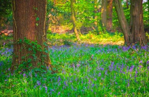 London's five wildest woodland neighbourhoods