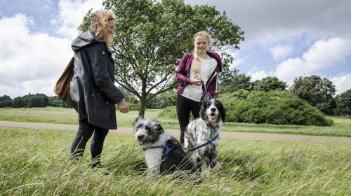 There's a new limit on dog walkers coming to Hampstead Heath