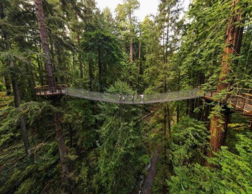 California's stunning new sky walk gives you a bird's eye view of the redwoods