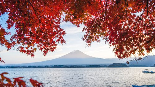 Japan 2021 autumn leaves forecast out now: when and where to see the best foliage