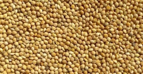 Millet based diet may help manage diabetes: Study - Know the benefits of this wonderful whole grain