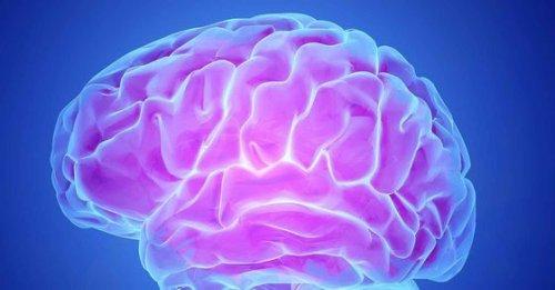 Brain region is key locus of learning: Neuroscientists