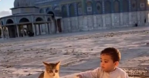 'Sharing is caring': Viral video shows little boy sharing food with cat [WATCH]