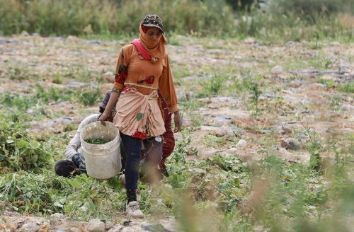 Jordan faces 'critical' drought, but many warn the worst is yet to come