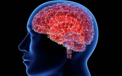 Israeli scientists say they've paved way to turn off the brain's 'hunger switch'