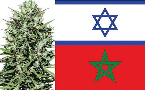 Morocco's cannabis industry could benefit from normalization with Israel