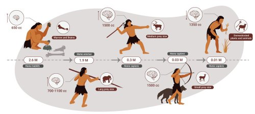 For 2 million years, humans ate meat and little else — study
