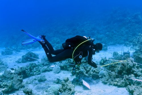 Government report sounds alarm over record Red Sea temperatures, marine trash