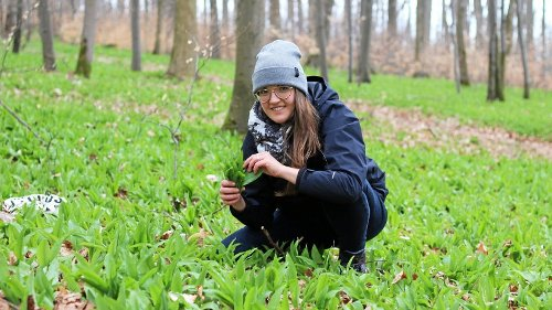 Der grüne Teppich des Eichsfeld-Waldes