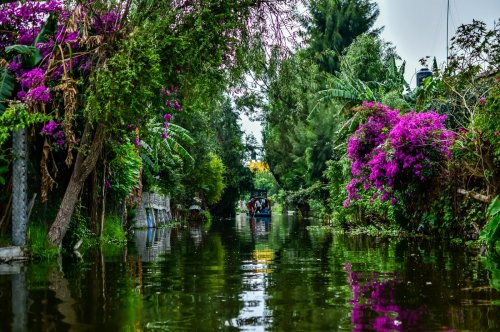 Mexico City cleans up 'floating gardens' dating back to Aztec times