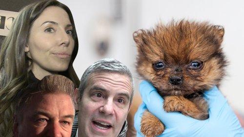 Baldwin, Cohen, Cummings Fighting To End Retail Puppy Sales ... It's Just Too Cruel!!!