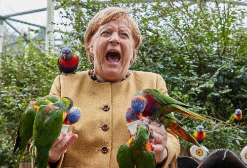 Kurioses Foto: Merkel besucht Vogelpark – und wird von Papagei gebissen