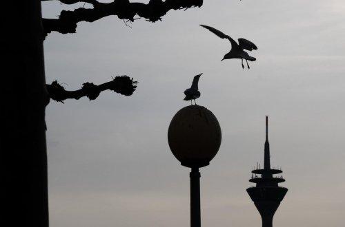 Düsseldorf: Wetter-Vorhersage für heute und morgen