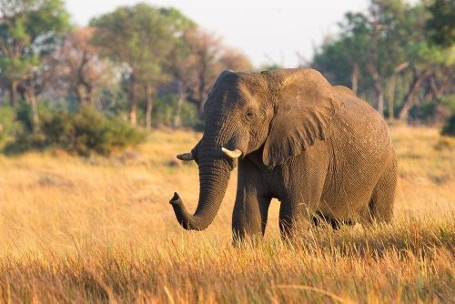 Elefant trampelt Mann in Nationalpark tot – Sohn sieht zu
