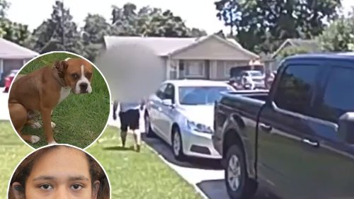 Texas Mom Opens Fire on Neighbor's Escaped Puppy, Shoots Own Son Instead