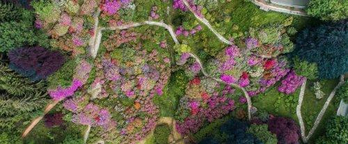 L'Oasi Zegna riapre con un'esplosione di rododendri | Touring Club
