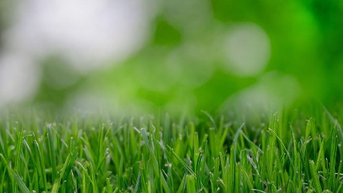 Sarah Browning: Get the jump on weeds in lawn