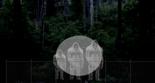 COLUMN:In the Shadows- The cemetery Bigfoot family incident