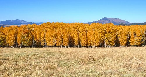 9 Ways To Spend A Beautiful Fall Weekend In Flagstaff