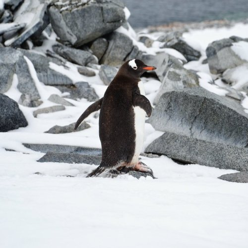 I Took A Solo Trip To Antarctica And It Was Amazing - TravelAwaits