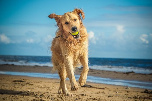 The Best Dog-Friendly Beaches In The U.S.