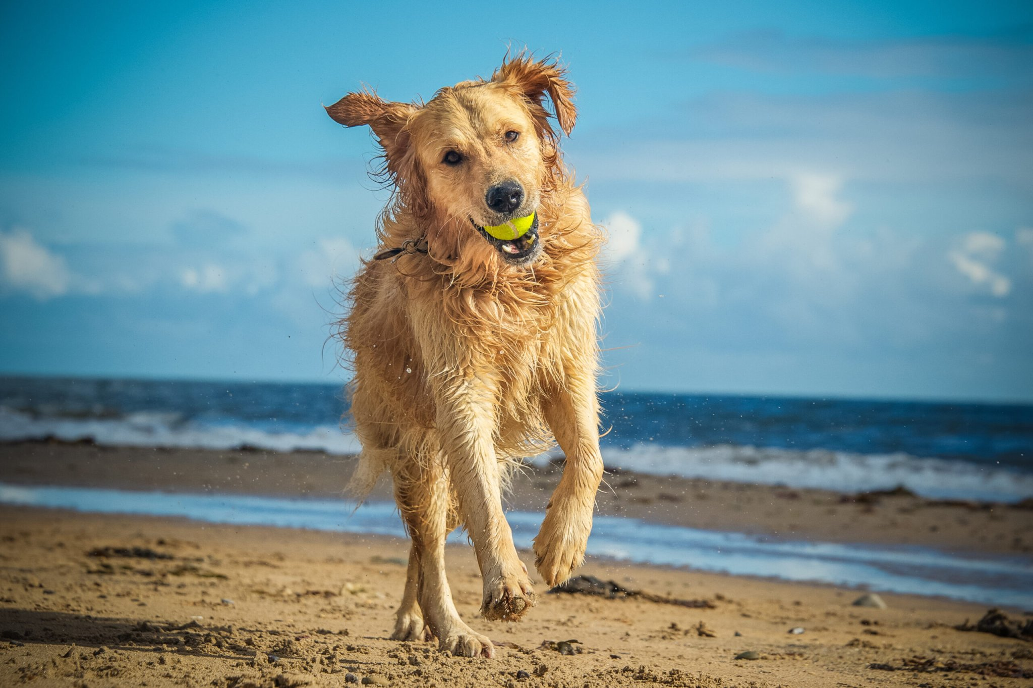 Doggone It, Here Are The Best Pup Beaches! - cover