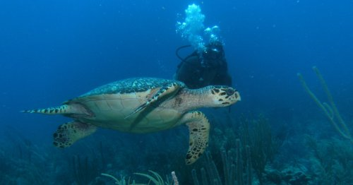 7 Best Outdoor Experiences On Ambergris Caye, Belize - TravelAwaits