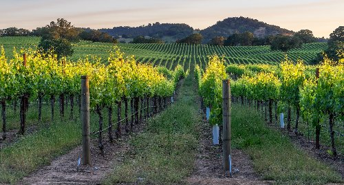 How To Spend A Perfect Long Weekend In Beautiful Healdsburg, CA