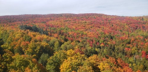 12 Fantastic Places To See Fall Foliage In The Midwest
