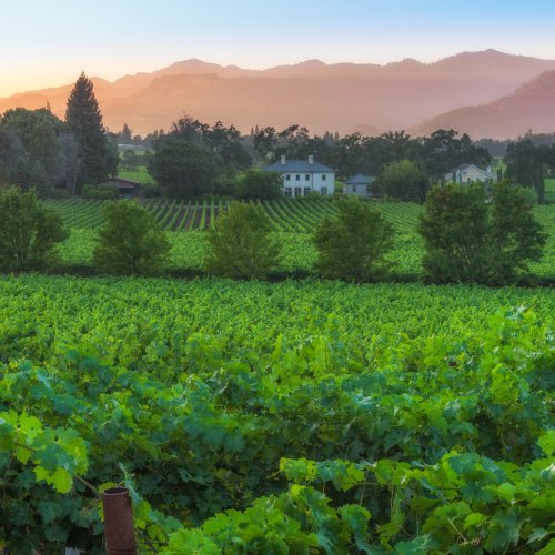 How To Spend A Perfect Day In Charming St. Helena, California