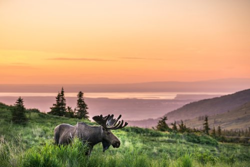7 Fantastic Summer Outdoor Experiences in Anchorage, Alaska