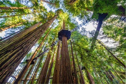 Redwood Skywalk Gives Visitors Unique View Of Majestic Trees - TravelAwaits
