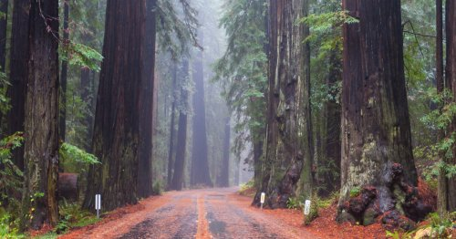 10 Important Ranger Tips For Visiting Redwood National Park - TravelAwaits