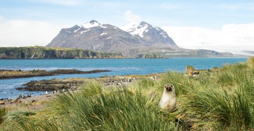 6 Physician Tips To Prepare For A Cruise To Antarctica