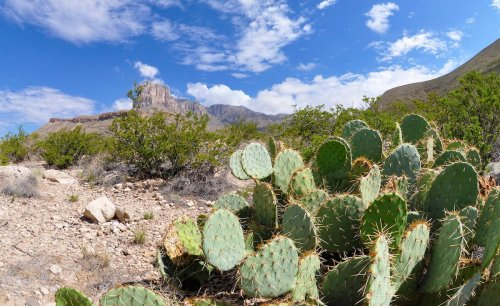 12 Best Things To Do At Guadalupe National Mountains National Park - TravelAwaits