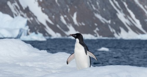7 Best Things About Visiting Antarctica