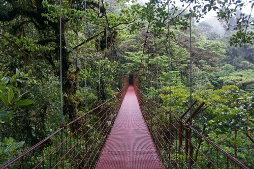 5 Reasons You'll Fall In Love With Costa Rica's Incredible Cloud Forest