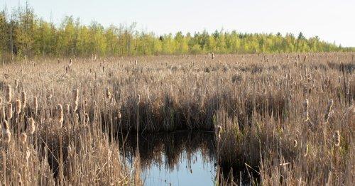 Mer Bleue Bog: Canada's Most Unique Ecosystem - TravelAwaits