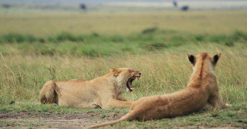 The Story Of Kenya's Tsavo Man-Eaters - TravelAwaits