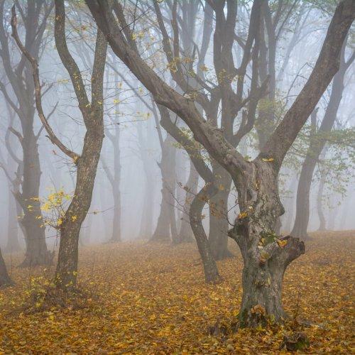 Meet Hoia Baciu Forest, The Bermuda Triangle Of Romania - TravelAwaits