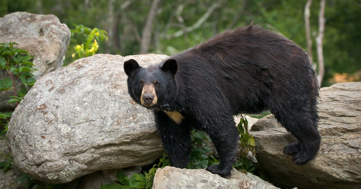 Bear Bandits & A Pre-Pandemic Letter From A Pilot, The Travel News You Want - cover